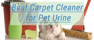 Best Carpet Cleaners for Pet Urine