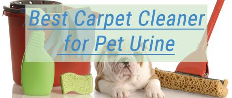 Best Carpet Cleaner for Pet Urine 2019 🐕 - 🐈 Reviews