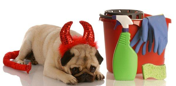 bad dog - pug dressed as devil beside cleaning supplies
