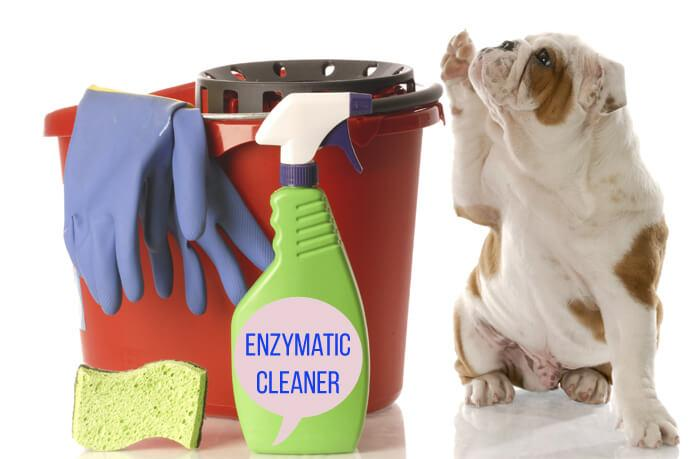 What is an Enzymatic Cleaner